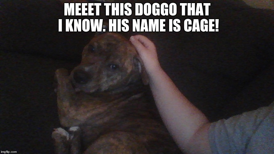 He's a pitbull :D | MEEET THIS DOGGO THAT I KNOW. HIS NAME IS CAGE! | image tagged in doggo,memes,pitbull | made w/ Imgflip meme maker