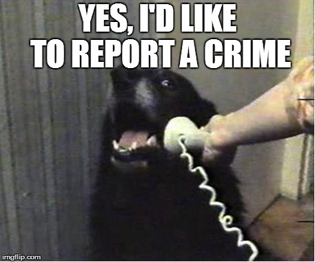 Yes this is dog | YES, I'D LIKE TO REPORT A CRIME | image tagged in yes this is dog | made w/ Imgflip meme maker