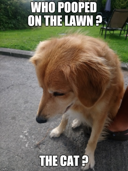 Wasn't me | WHO POOPED ON THE LAWN ? THE CAT ? | image tagged in dogs,cats,dog poop | made w/ Imgflip meme maker