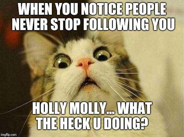 Scared Cat Meme | WHEN YOU NOTICE PEOPLE NEVER STOP FOLLOWING YOU HOLLY MOLLY... WHAT THE HECK U DOING? | image tagged in memes,scared cat | made w/ Imgflip meme maker