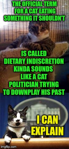 You have some 'splaining to do | THE OFFICIAL TERM FOR A CAT EATING SOMETHING IT SHOULDN'T I CAN EXPLAIN IS CALLED DIETARY INDISCRETION KINDA SOUNDS LIKE A CAT POLITICIAN TR | image tagged in indiscreet cat,he ate what,politicians backpedaling | made w/ Imgflip meme maker