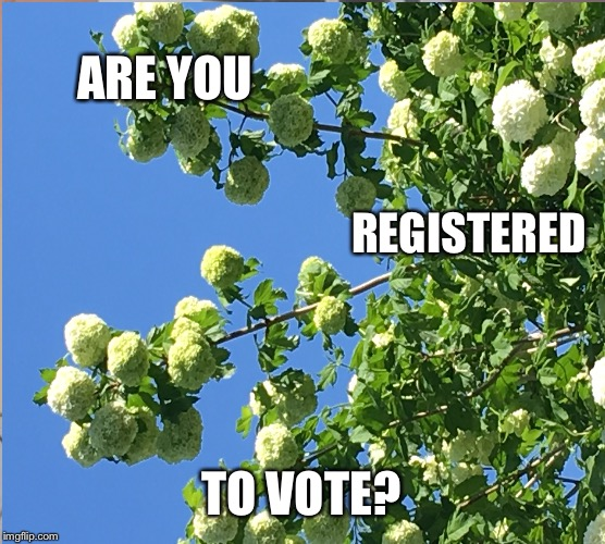 Register to VOTE | ARE YOU REGISTERED TO VOTE? | image tagged in vote,register,election 2020 | made w/ Imgflip meme maker