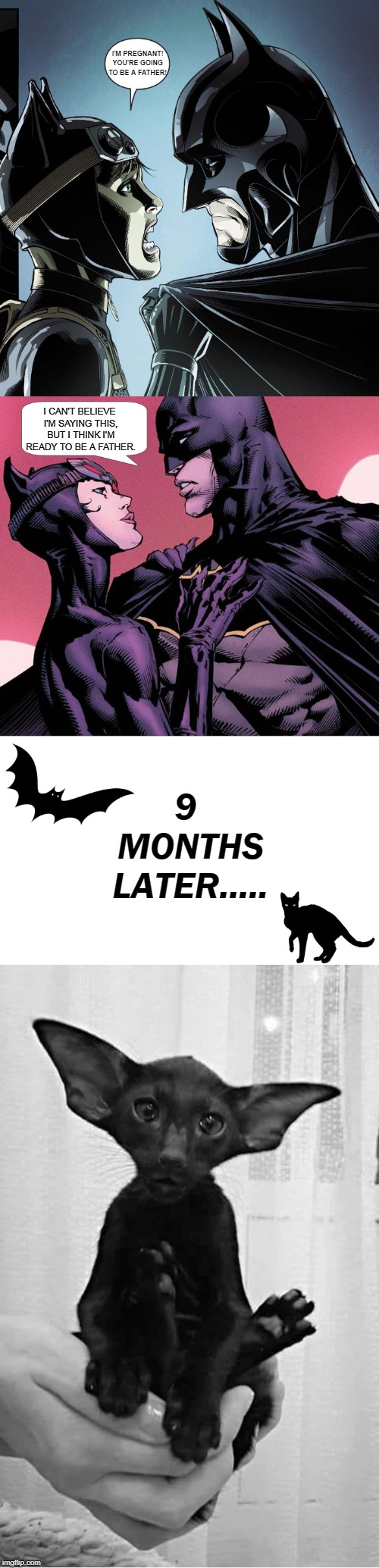 BATCAT | I'M PREGNANT! YOU'RE GOING TO BE A FATHER! 9 MONTHS LATER..... I CAN'T BELIEVE I'M SAYING THIS, BUT I THINK I'M READY TO BE A FATHER. | image tagged in memes,batman,catwoman,superheroes,superhero,superhero week | made w/ Imgflip meme maker