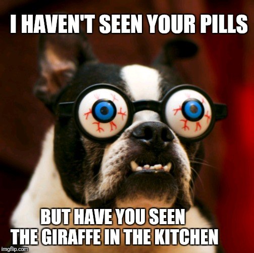 Too high to be in the kitchen | I HAVEN'T SEEN YOUR PILLS BUT HAVE YOU SEEN THE GIRAFFE IN THE KITCHEN | image tagged in memes,drunk dog,high dog,funny | made w/ Imgflip meme maker