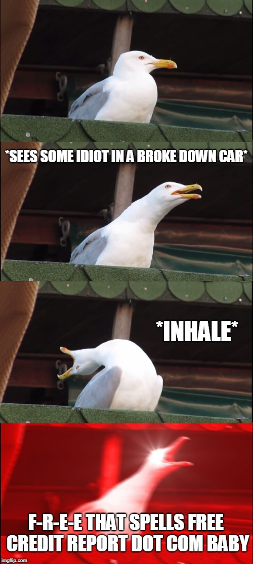 Inhaling Seagull Meme | *SEES SOME IDIOT IN A BROKE DOWN CAR* *INHALE* F-R-E-E THAT SPELLS FREE CREDIT REPORT DOT COM BABY | image tagged in memes,inhaling seagull | made w/ Imgflip meme maker