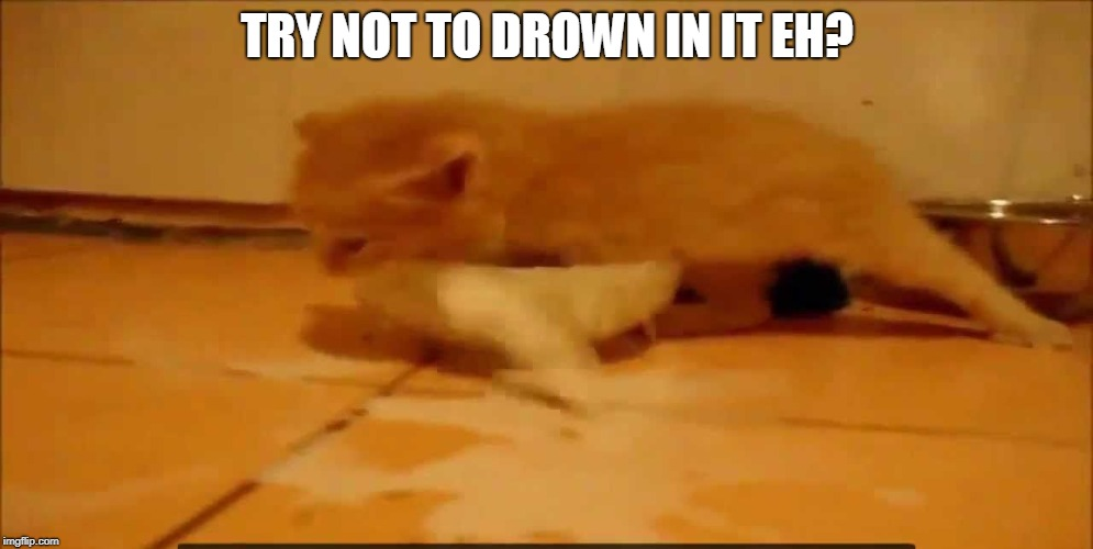 TRY NOT TO DROWN IN IT EH? | image tagged in cat | made w/ Imgflip meme maker