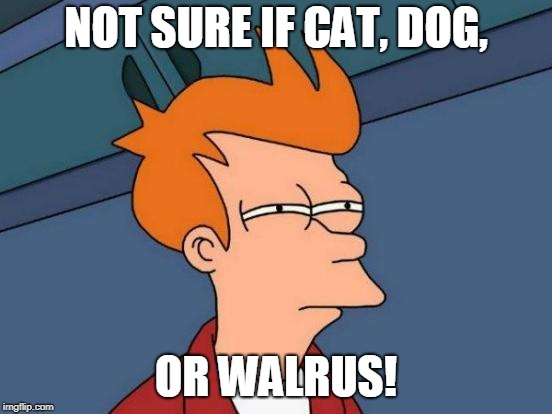 Futurama Fry Meme | NOT SURE IF CAT, DOG, OR WALRUS! | image tagged in memes,futurama fry | made w/ Imgflip meme maker
