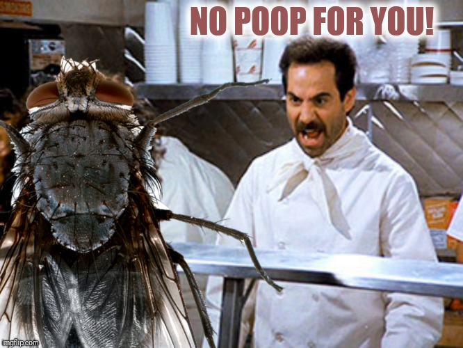 NO POOP FOR YOU! | made w/ Imgflip meme maker
