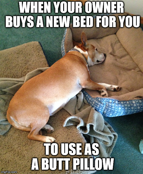 Extra Dog Bed | WHEN YOUR OWNER BUYS A NEW BED FOR YOU TO USE AS A BUTT PILLOW | image tagged in dogs,funny,silly,spoiled,pampered,excessive | made w/ Imgflip meme maker