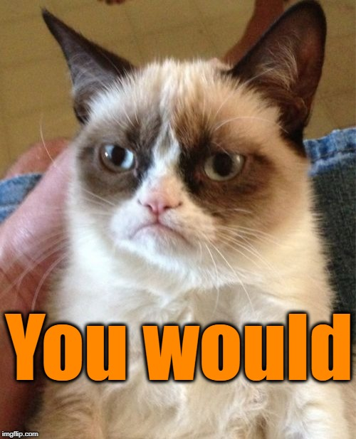 Grumpy Cat Meme | You would | image tagged in memes,grumpy cat | made w/ Imgflip meme maker