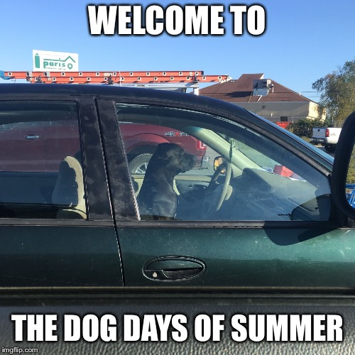 This Dog Thinks He's Driving | WELCOME TO THE DOG DAYS OF SUMMER | image tagged in dog days,car,dog,summer,driver,dogs | made w/ Imgflip meme maker