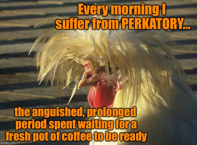 PERKATORY is a REAL symptom  | Every morning I suffer from PERKATORY... the anguished, prolonged period spent waiting for a fresh pot of coffee to be ready | image tagged in crazy chicken,coffee,perkatory,i need coffee | made w/ Imgflip meme maker