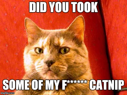 Suspicious Cat | DID YOU TOOK SOME OF MY F****** CATNIP | image tagged in memes,suspicious cat | made w/ Imgflip meme maker