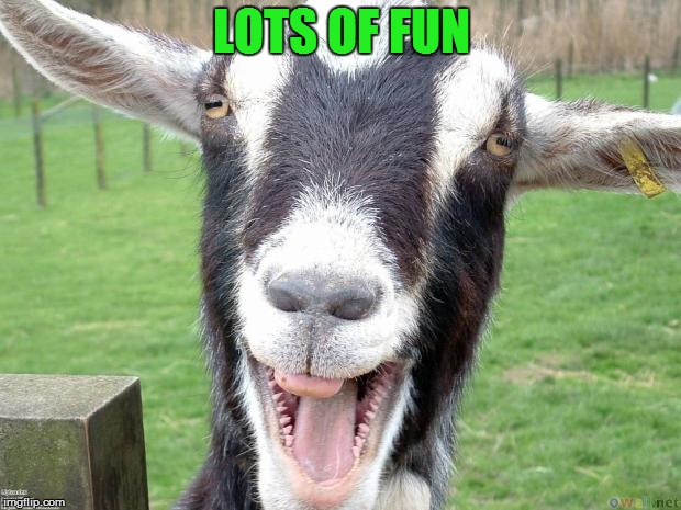 Funny Goat | LOTS OF FUN | image tagged in funny goat | made w/ Imgflip meme maker