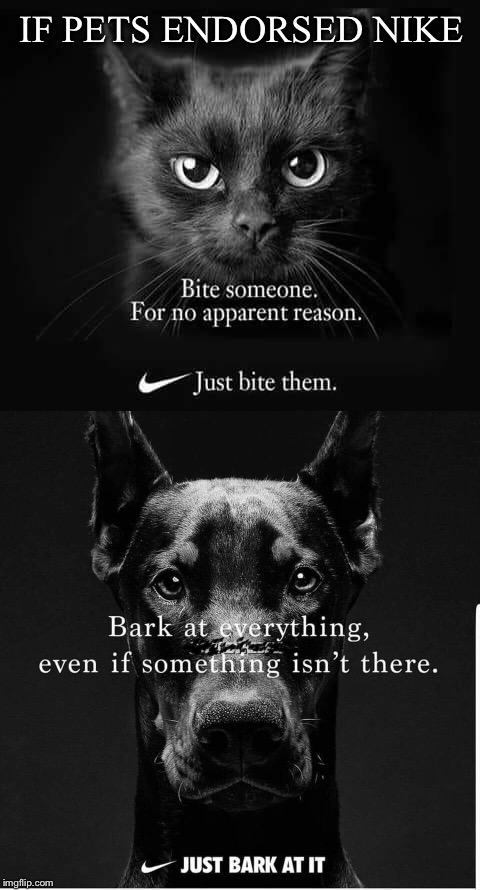 The difference between cats and dogs | IF PETS ENDORSED NIKE | image tagged in cat memes,dog memes,believe in something,nike,funny memes | made w/ Imgflip meme maker