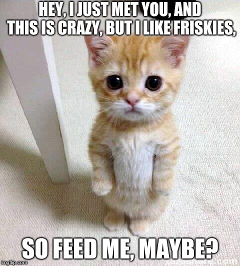 Cute Cat | HEY, I JUST MET YOU, AND THIS IS CRAZY, BUT I LIKE FRISKIES, SO FEED ME, MAYBE? | image tagged in memes,cute cat | made w/ Imgflip meme maker