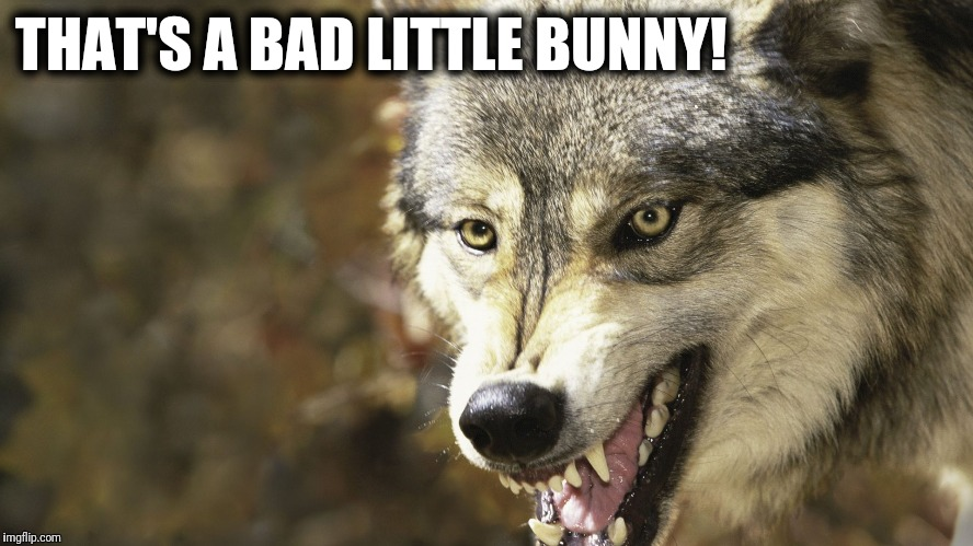 THAT'S A BAD LITTLE BUNNY! | made w/ Imgflip meme maker