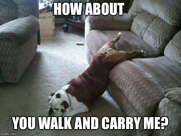 Lazy Dog |  HOW ABOUT; YOU WALK AND CARRY ME? | image tagged in lazy dog | made w/ Imgflip meme maker