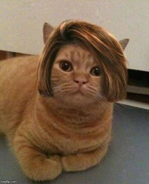 Cat manager hairstyle | . | image tagged in cat manager hairstyle | made w/ Imgflip meme maker
