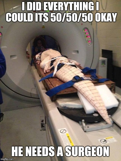 Cat Scan |  I DID EVERYTHING I COULD ITS 50/50/50 OKAY; HE NEEDS A SURGEON | image tagged in alligator,save me,hello darkness my old friend | made w/ Imgflip meme maker