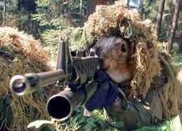 image tagged in rifle squirrel | made w/ Imgflip meme maker