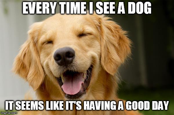 Happy Dog | EVERY TIME I SEE A DOG IT SEEMS LIKE IT'S HAVING A GOOD DAY | image tagged in happy dog | made w/ Imgflip meme maker