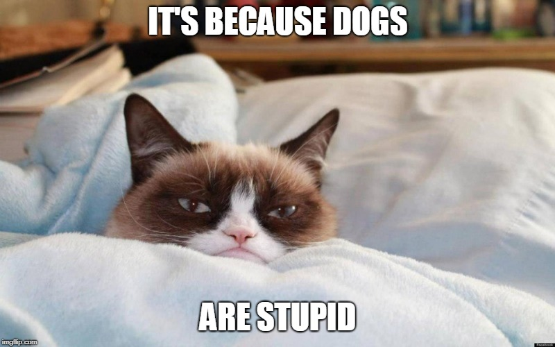 grumpy cat bed | IT'S BECAUSE DOGS ARE STUPID | image tagged in grumpy cat bed | made w/ Imgflip meme maker