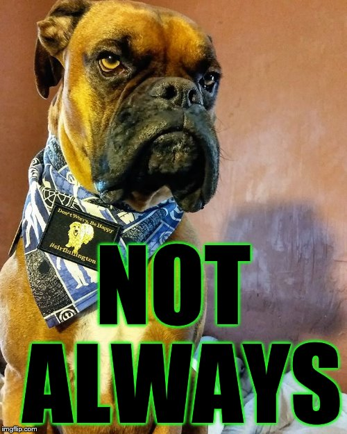 Grumpy Dog | NOT ALWAYS | image tagged in grumpy dog | made w/ Imgflip meme maker