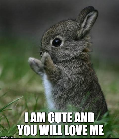 Cute Bunny | I AM CUTE AND YOU WILL LOVE ME | image tagged in cute bunny | made w/ Imgflip meme maker