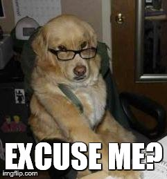 EXCUSE ME? | image tagged in finance dog,funny,dogs,reactions,animals | made w/ Imgflip meme maker