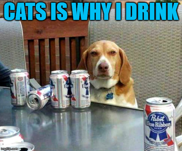 beer dog | CATS IS WHY I DRINK | image tagged in beer dog | made w/ Imgflip meme maker