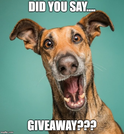 Funny Dog | DID YOU SAY.... GIVEAWAY??? | image tagged in dog,funny dog | made w/ Imgflip meme maker