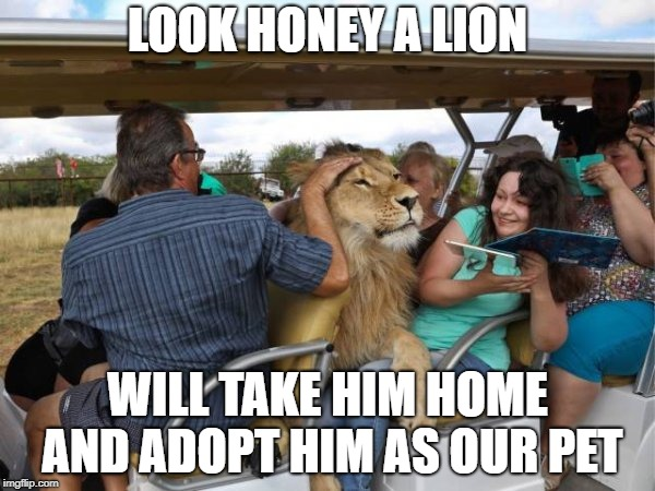 LOOK HONEY A LION WILL TAKE HIM HOME AND ADOPT HIM AS OUR PET | image tagged in funny,awesomeness,cute,lion | made w/ Imgflip meme maker