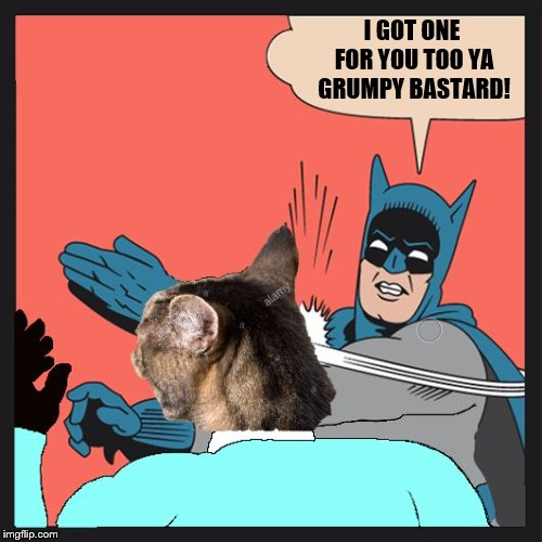 Batman Slapping Cat | I GOT ONE FOR YOU TOO YA GRUMPY BASTARD! | image tagged in batman slapping cat | made w/ Imgflip meme maker