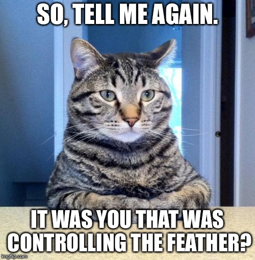 So... | SO, TELL ME AGAIN. IT WAS YOU THAT WAS CONTROLLING THE FEATHER? | image tagged in serious cat,so much drama,cats,funny cats,lolcats,memes | made w/ Imgflip meme maker