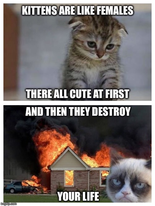 image tagged in females,kittens,destroyed life,funny cats,cats,sad kitten | made w/ Imgflip meme maker