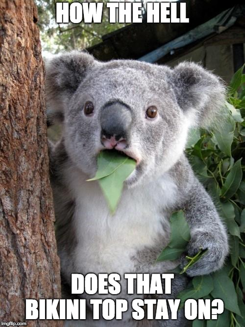 Surprised Koala Meme | HOW THE HELL DOES THAT BIKINI TOP STAY ON? | image tagged in memes,surprised koala | made w/ Imgflip meme maker