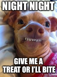 teeth dog | NIGHT NIGHT GIVE ME A TREAT OR I'LL BITE | image tagged in teeth dog | made w/ Imgflip meme maker