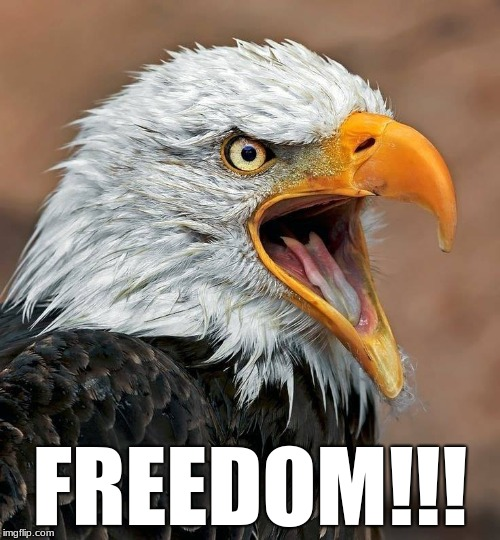 FREEDOM!!! | image tagged in eagle,freedom | made w/ Imgflip meme maker