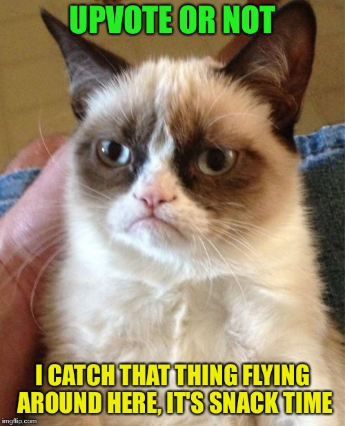 Grumpy Cat Meme | UPVOTE OR NOT I CATCH THAT THING FLYING AROUND HERE, IT'S SNACK TIME | image tagged in memes,grumpy cat | made w/ Imgflip meme maker