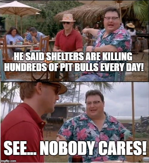 Nobody Cares Pit Bull | HE SAID SHELTERS ARE KILLING HUNDREDS OF PIT BULLS EVERY DAY! SEE... NOBODY CARES! | image tagged in memes,see nobody cares,pitbull,pit bull,pibbles,kill pit bulls | made w/ Imgflip meme maker