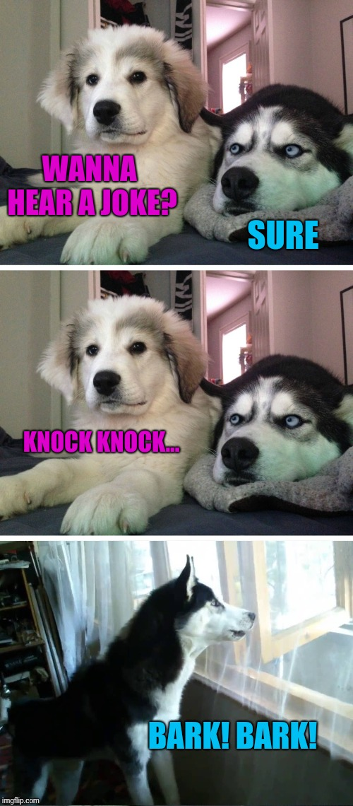 Bad pun dogs | WANNA HEAR A JOKE? SURE KNOCK KNOCK... BARK! BARK! | image tagged in bad pun dogs | made w/ Imgflip meme maker