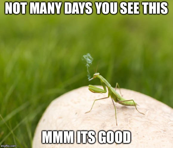 Smoking Cricket | NOT MANY DAYS YOU SEE THIS MMM ITS GOOD | image tagged in cricket | made w/ Imgflip meme maker