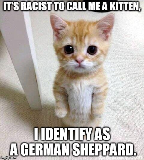 Cute Cat | IT'S RACIST TO CALL ME A KITTEN, I IDENTIFY AS A GERMAN SHEPPARD. | image tagged in memes,cute cat | made w/ Imgflip meme maker
