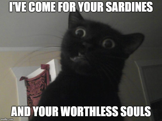 RWDC | I'VE COME FOR YOUR SARDINES AND YOUR WORTHLESS SOULS | image tagged in wtf cat | made w/ Imgflip meme maker