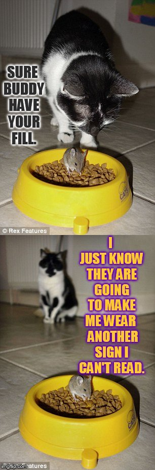 Another Sign In My Future (Sigh) | SURE BUDDY HAVE YOUR FILL. I JUST KNOW THEY ARE GOING TO MAKE ME WEAR   ANOTHER SIGN I CAN'T READ. | image tagged in memes,cat,watching,mouse,eating,cat food | made w/ Imgflip meme maker