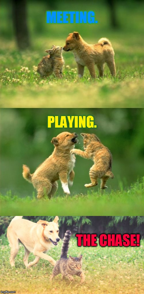 A Play Date |  MEETING. PLAYING. THE CHASE! | image tagged in memes,kitten,puppy,meet,play,chase | made w/ Imgflip meme maker