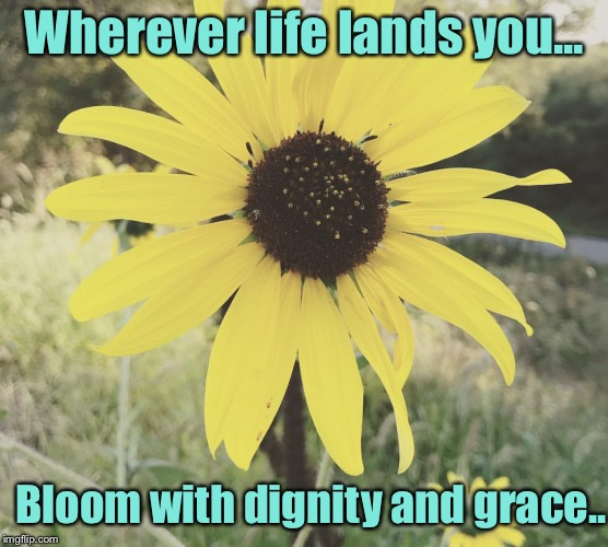 No matter what Life hands you...be your best ❤️ | Wherever life lands you... Bloom with dignity and grace.. | image tagged in dignity,grace,inspirational quote,motivation | made w/ Imgflip meme maker