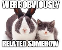 cats xxx rabbits = cousins | WERE OBVIOUSLY RELATED SOMEHOW | image tagged in relation of cats with rabbits,wait cats and rabbits can be cousins,cousins | made w/ Imgflip meme maker