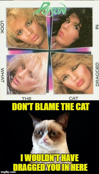 Look what Grumpy dragged in | DON'T BLAME THE CAT I WOULDN'T HAVE DRAGGED YOU IN HERE | image tagged in funny memes,grumpy cat,poison,80s music | made w/ Imgflip meme maker